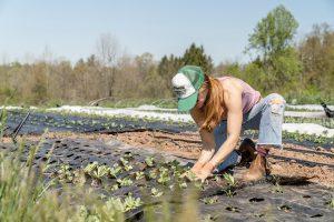 Denmark's first rooftop farm